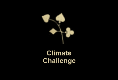 Nordic bet recension King sparks